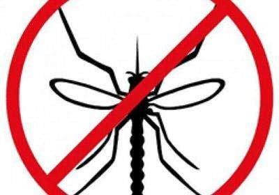 蚊子2.jpg