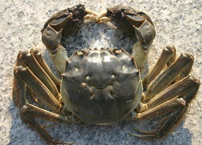 消费保_消费生活_螃蟹,再好吃也要管住嘴